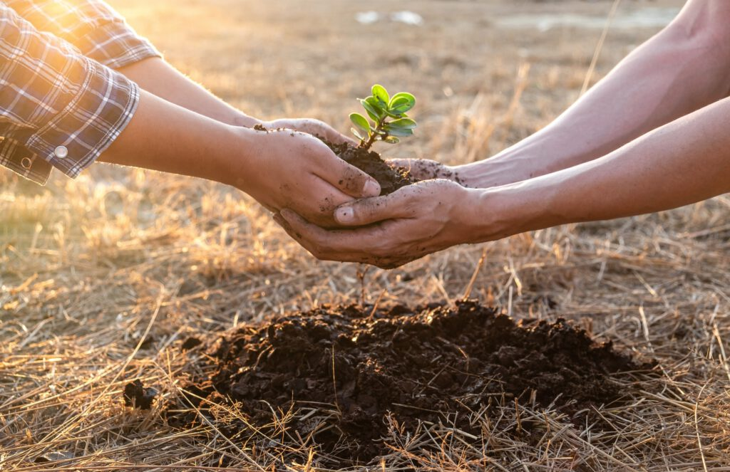 Hand of people helping plant the seedlings tree to preserve natural environment while working save