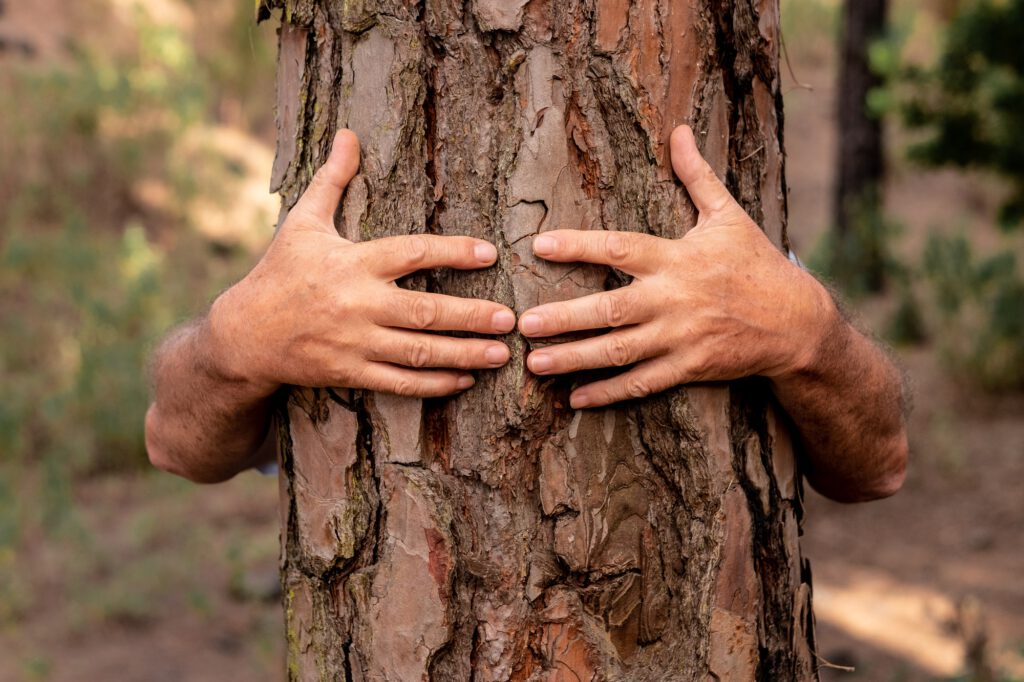 Human hands hugging a tree in the woods - love for outdoors and nature - earth's day concept